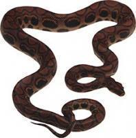 Средства от змей